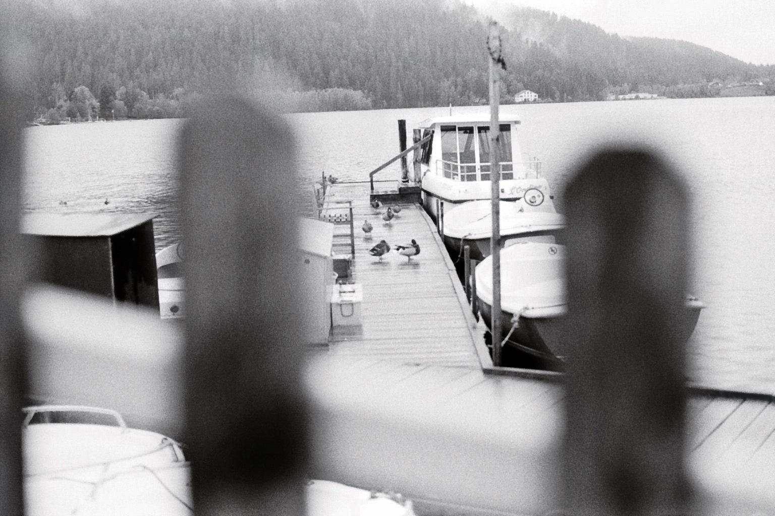 Enten auf einem Steg an dem Boote festgemacht sind