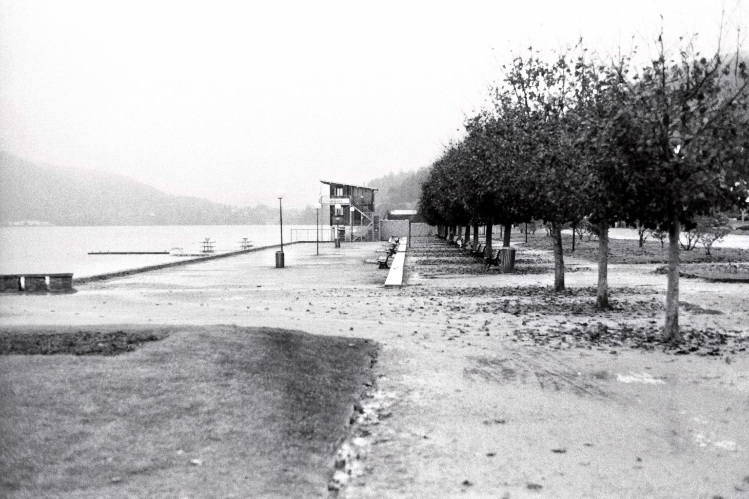Eine Allee von Bäumen an einem See